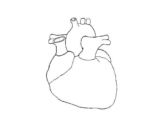 Cardiacveins