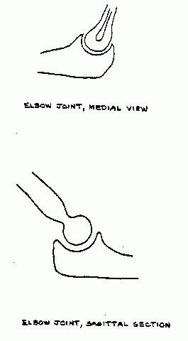 How To Draw Joint Rose Diagram
