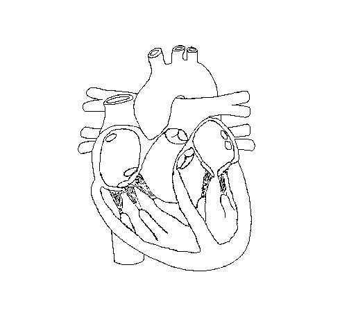 Heartconduction a blank diagram of the insdie of a heart on which to draw the conductive system ccuart Choice Image