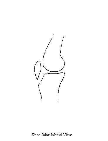kneejointmedial blank joint diagram #14