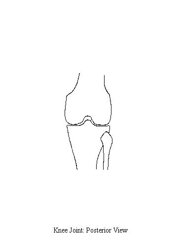 KneeJointPosterior kneejointposterior