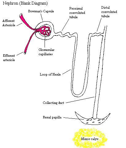 NephronComplete