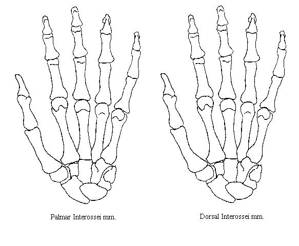 mobile  anatomical hand coloring pages