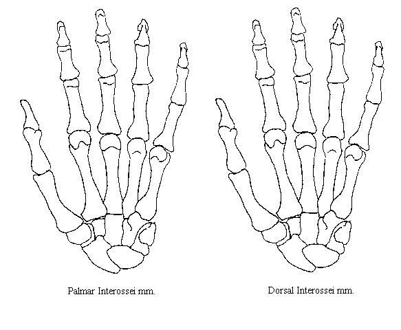 Blank Foot Diagram