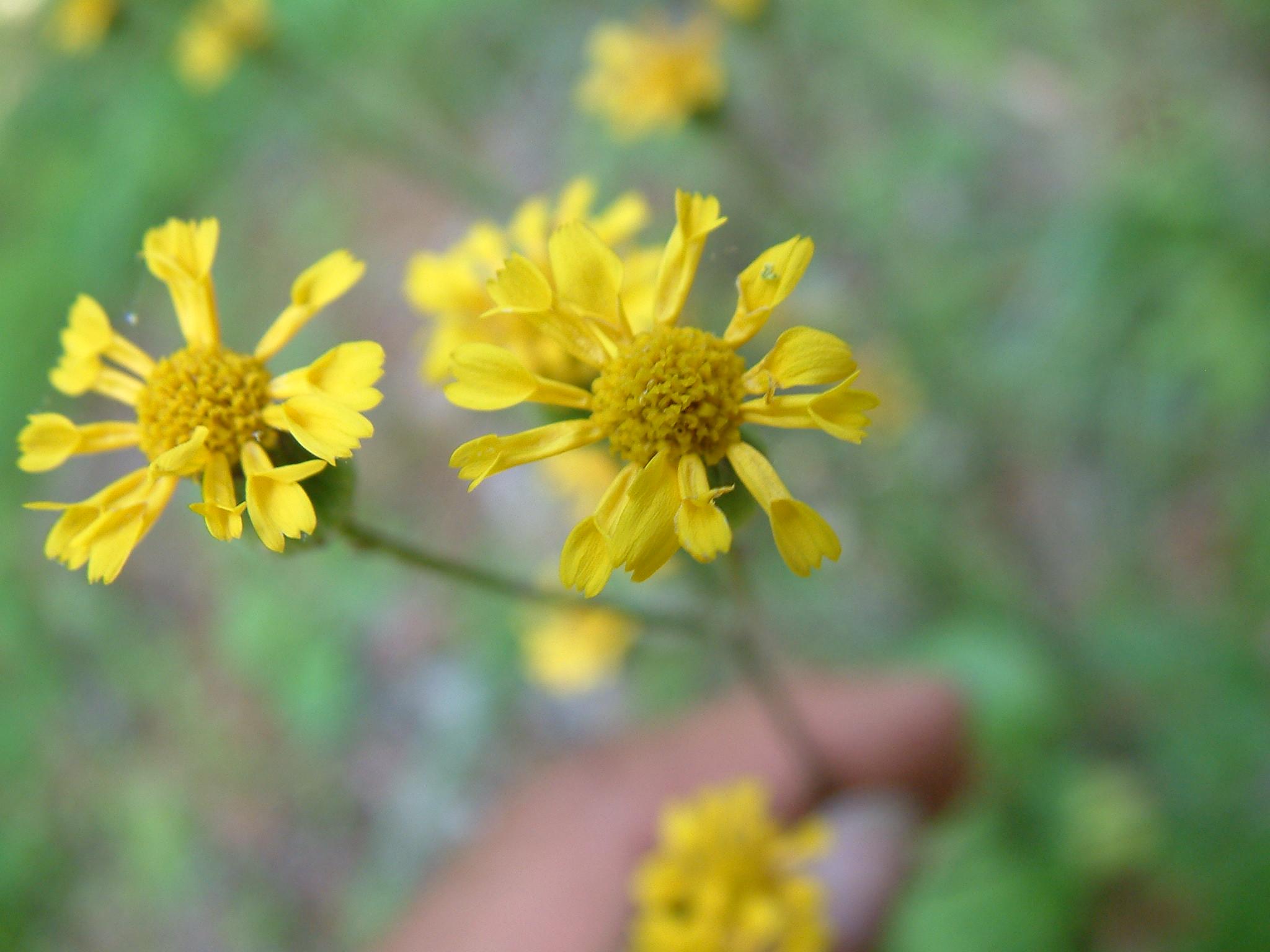 Appalachian Flora Plant List 2005 New