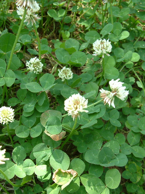 Image Result For What Weeds Can